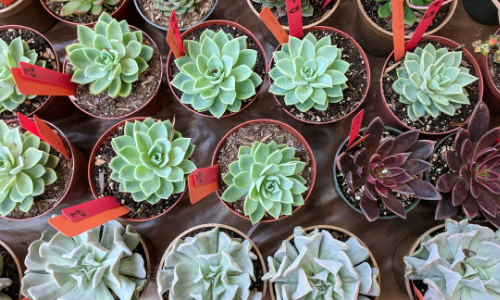 Variety of succulents on a table