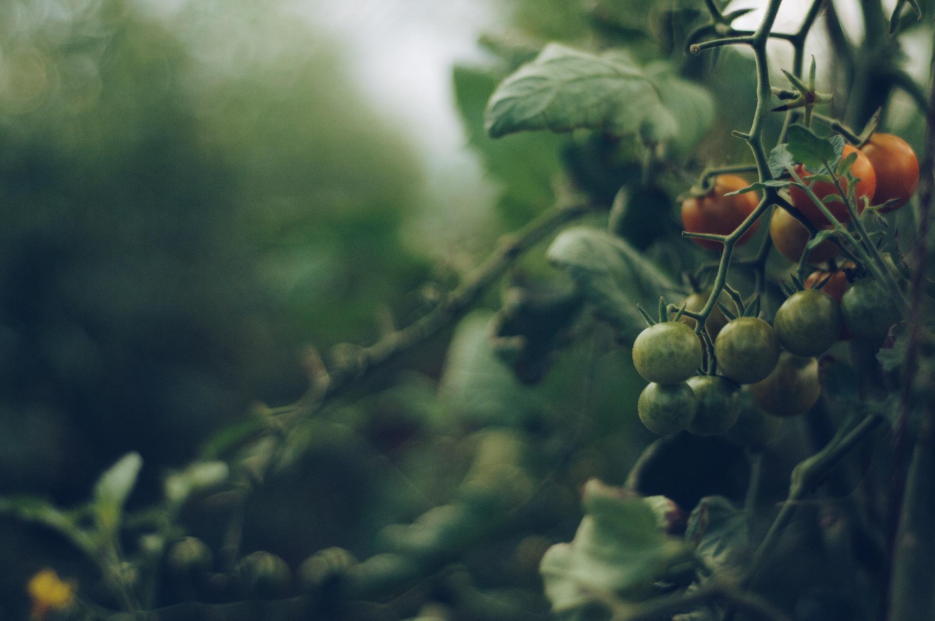 Gardening food